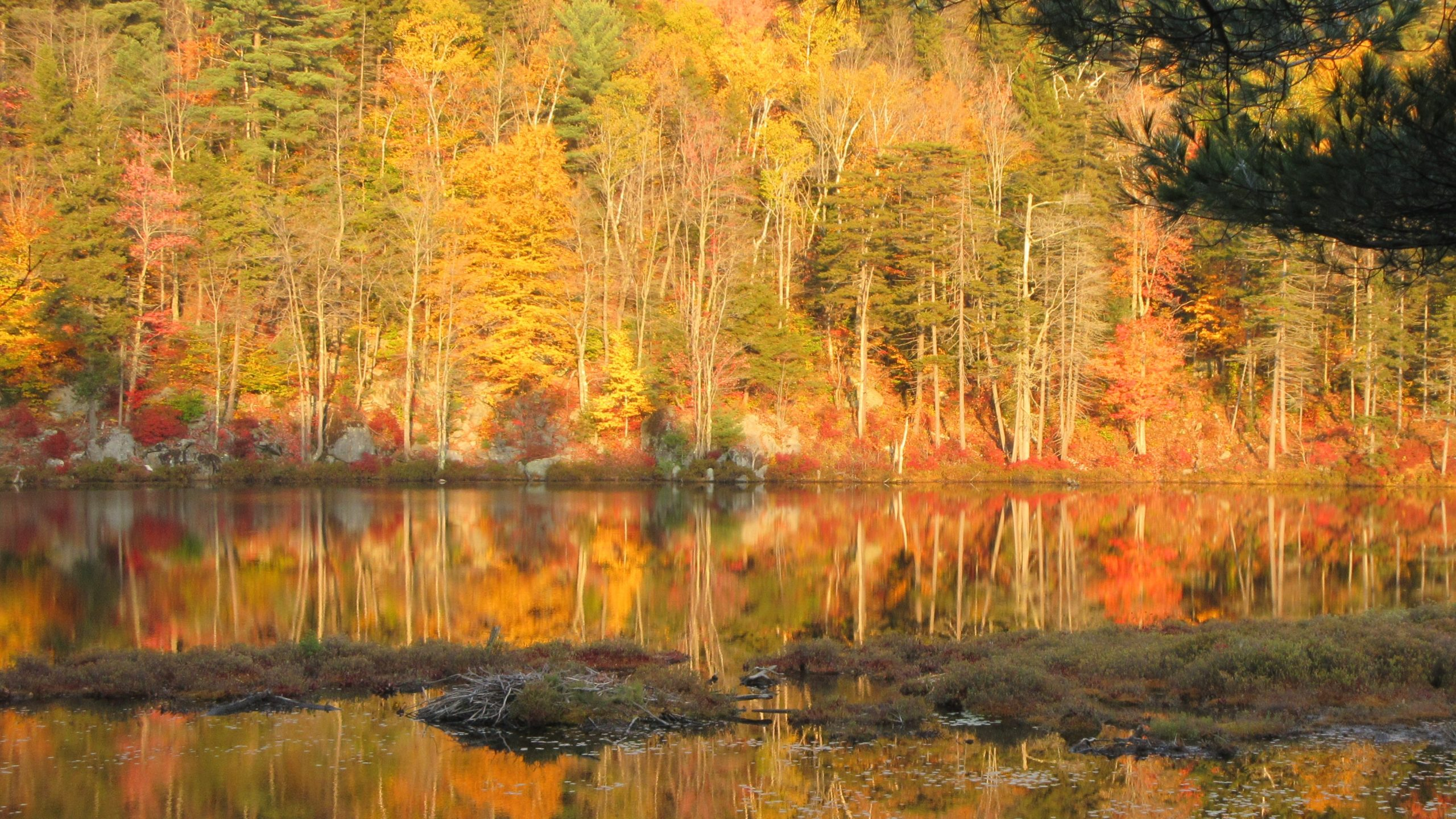 Autumn leaves over Lily Pond